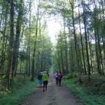 nordic-walking-10